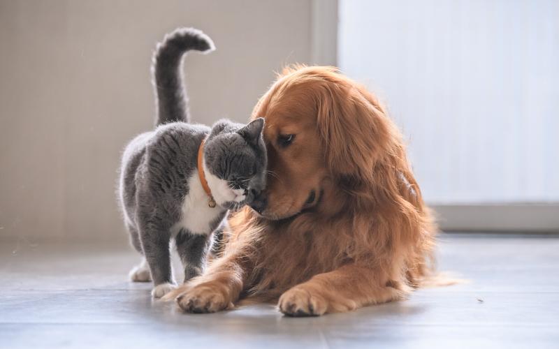 rapporto uomo animale terme riolo